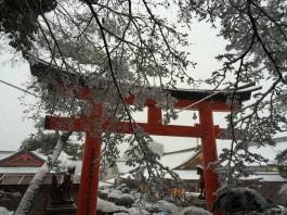Snow and umbrellas at Fushimi Inari Shrine