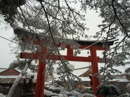 Snow and umbrellas at Fushimi Inari Shrine