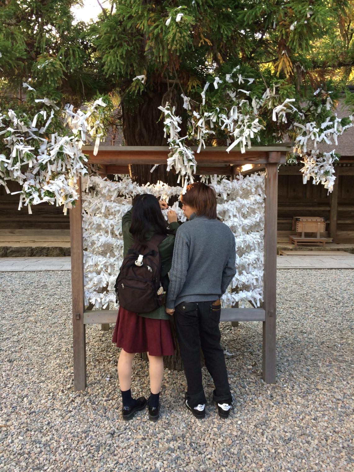 Fortune Tree Izumo Shrine 2