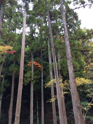 Ochidani Park 1