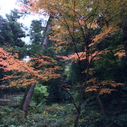 Ochidani Park 2