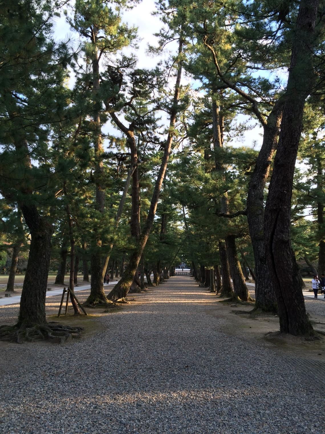 The Way of the Gods_Izumo Shrine